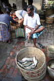 Fish market in Kumrokhali Stock Image