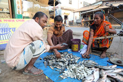 Fish market in Kumrokhali, West Bengal, India Royalty Free Stock Photo