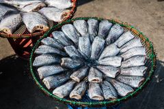 Fish in market Stock Image
