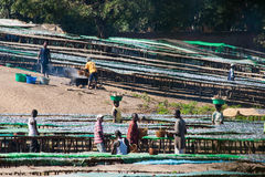 Fish market in Malawi. Stock Images