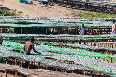 Fish market in Malawi. Royalty Free Stock Photography