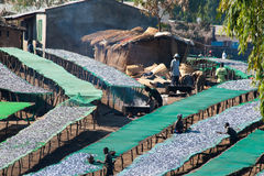 Fish market in Malawi Royalty Free Stock Photos