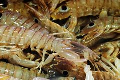 Fish market - Mantis shrimp (Squilla mantis) Stock Image