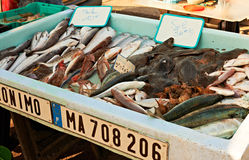 Fish market of Marseille in France Stock Images