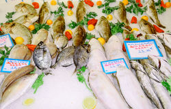 Fish market. The Mediterranean, Europe Royalty Free Stock Images