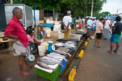 Fish market in Mirissa Stock Photography