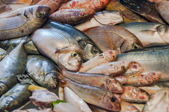 Fish in market Stock Photos