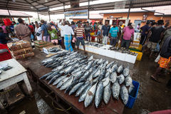 Fish market. Negombo, Sri Lanka. It is approximately 35 km north of Colombo City. Negombo is known for its huge and old fishing industry with busy fish markets royalty free stock photos