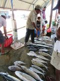 Fish Market in Negombo / Sri Lanka Royalty Free Stock Photo