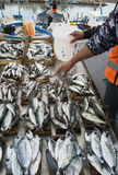 Fish market in Palermo, Sicily Royalty Free Stock Photos