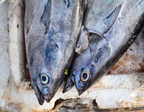 Fish at the market in Phu Quoc, Vietnam Stock Images