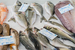 The fish market. In the picture we can see different types of fish at a market royalty free stock photo
