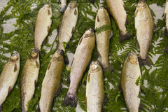 Fish at market. Pile  of fish in a market display Royalty Free Stock Image
