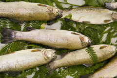 Fish at market. Pile  of fish in a market display Royalty Free Stock Photography