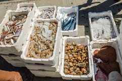 The fish market of the port of Fiumicino where fishermen sell freshly caught fish, octopus, shrimp, malyusks, oysters Stock Photos