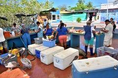 Fish Market in Puerto Ayora, Galapagos. Animals in Puerto Ayora fish market waiting for a bite on Santa Cruz Island, Galapagos National Park, Ecuador Royalty Free Stock Photos