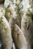 Fish at market for sale Royalty Free Stock Photos