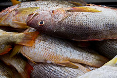 Fish in market Stock Photo