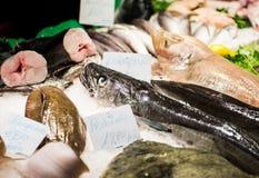 Fish in market Stock Photos