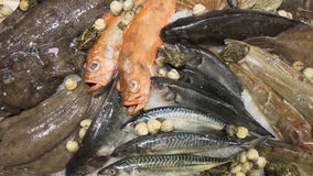 Fish on the market. Seafood for sale presented on the market Stock Images