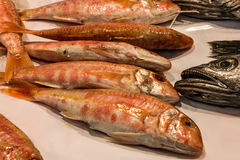 Fish on market. Seafood, Spain.  royalty free stock images