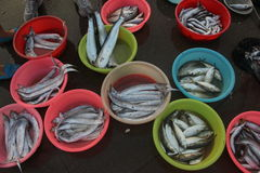 The Fish market In the SHENZHEN SHEKOU Stock Photography