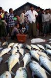 Fish Market in Sittwe, Myanmar Stock Images