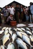 Fish Market in Sittwe, Myanmar Stock Image