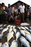 Fish Market in Sittwe, Myanmar Stock Photos