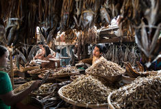 Fish market in Sittwe, Myanmar. royalty free stock image