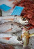 Fish market. Some fishes exposed on the ice at the fish market royalty free stock photography
