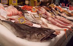 Fish market, Spain. One of the biggest fish markets in Palma de Mallorca. Great choice royalty free stock images