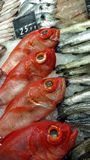 Fish Market Stall. With fresh sea fishes and price tags. Close up of colorfull red big eye `brama brama` ugly fish Royalty Free Stock Photography