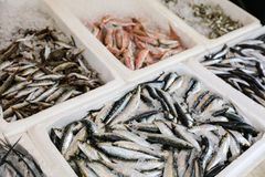 Fish market stall with freshly caught Europian pilchard or Sardina pilchardus and Europian anchovy or Engraulis. Encrasicolus, big-scale sand smelt, red mullet Stock Image