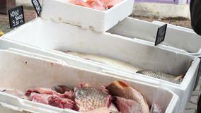 Fish on Market Stalls stock video