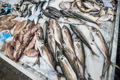 Fish market stand Royalty Free Stock Images
