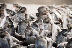 Fish on market table. Closeup of raw fish on market table Stock Photography
