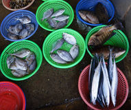 Fish Market at taiwan. The first fish being sold at the market Taiwan Stock Photography
