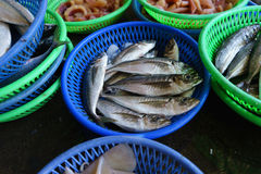 Fish Market at taiwan. The first fish being sold at the market Taiwan Stock Images