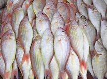 Fish on the market in Thailand Stock Photography