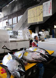 Fish Market in Tokyo Japan Royalty Free Stock Image