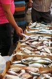 Fish market, Trapani, Sicily, Italy Royalty Free Stock Photography