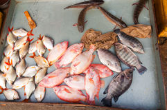 Fish at market Royalty Free Stock Images