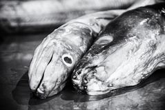 Fish market in Trogir, Croatia, colorless. Fish market in Trogir, Croatia. Detail photo. Food theme. Black and white photo royalty free stock images