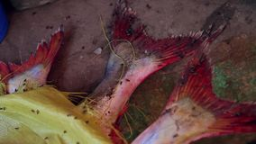 Fish market unsanitary in India stock video