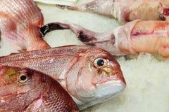 Fish market, Venice Stock Photos