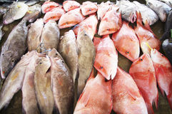 At the fish market in Victoria, Seychelles. At the fish-market Sir Selwyn Selwyn-Clarke Market in Victoria with Red Snappers among other fishes from the indian Royalty Free Stock Images