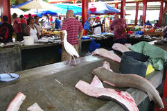At the fish market in Victoria, Seychelles. At the fish-market Sir Selwyn Selwyn-Clarke Market in Victoria with Cattle Egret (Bubulcus ibis), Shark, Bonito and Royalty Free Stock Image