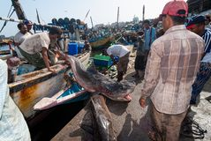 Fish market in Yemen Royalty Free Stock Photo