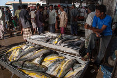 Fish market in Yemen Stock Photos